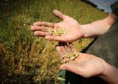 Tesco vzdeláva malých slovenských podnikateľov v projekte Farmársky grant