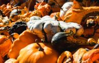 Tesco v programe Farmársky grant znovu vzdeláva malých slovenských dodávateľov