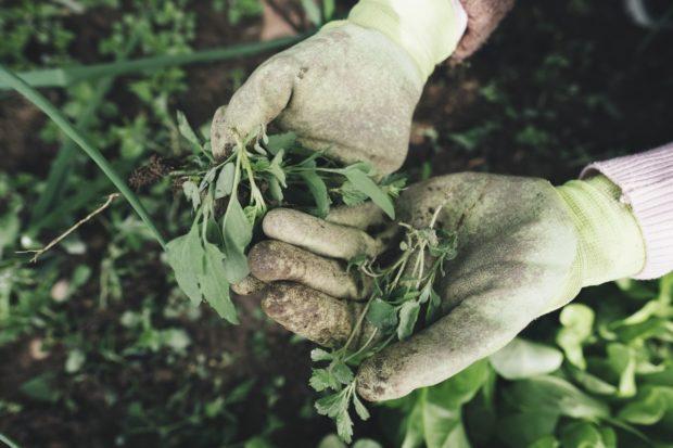 Na Slovensku rastie počet ekofariem, väčšina produkcie sa však vyváža do zahraničia