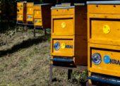 Kraj si adoptuje stovky úľov, vo vybraných predajniach ponúkne domáci med