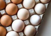 Najprv dobrý život sliepky, potom vajce