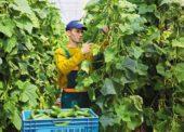 Tesco bojuje proti plytvaniu potravinami